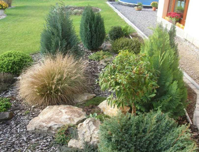 декоративные травы и злаки для ландшафтного дизайна