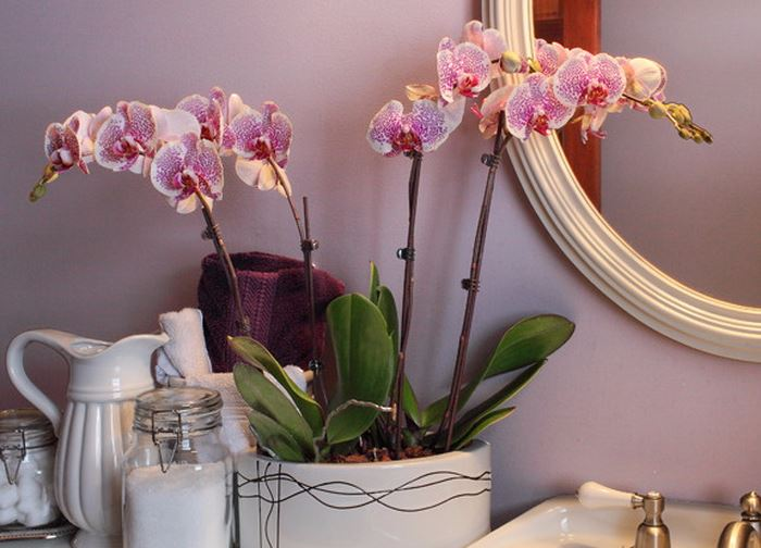 розовая орхидея у зеркала фото