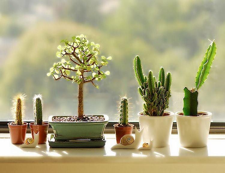 кактус на балконе. фото