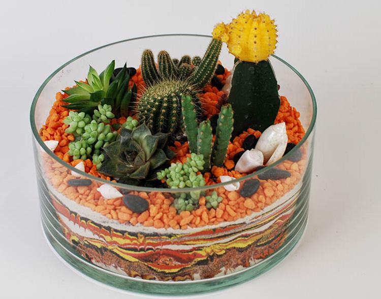 флорариум из кактусов фото пример