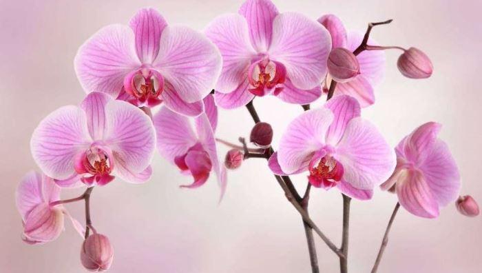 орхидея в ванной.