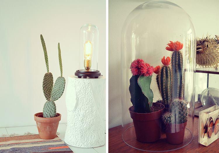 интерьер с кактусами фото
