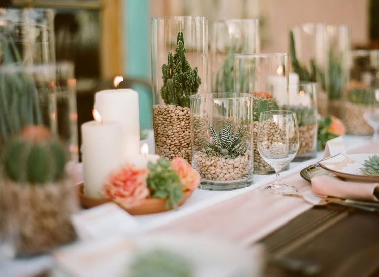 кактусы на столе фото