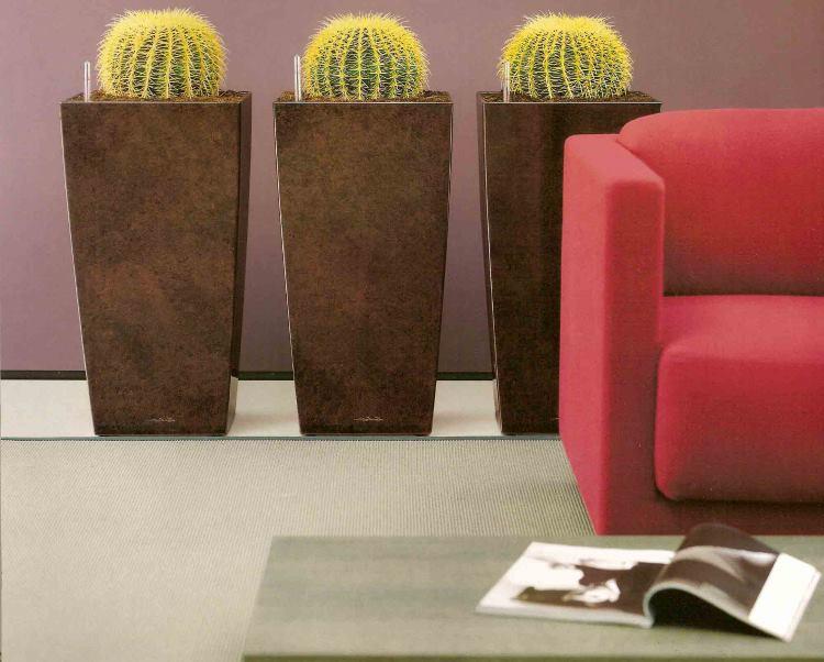 декор интерьера кактусами