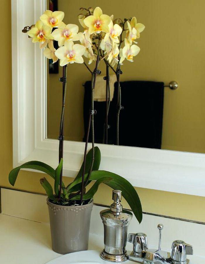 Желтая орхидея в ванной фото
